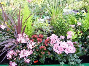 for Grande plante verte exterieur